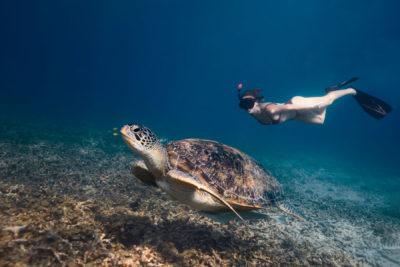 Snorkel con Tortugas en Shark Bay