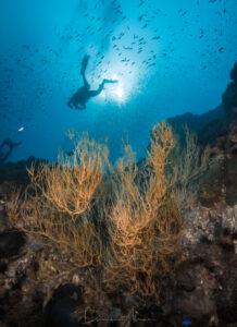 Deep ocean Blue 2